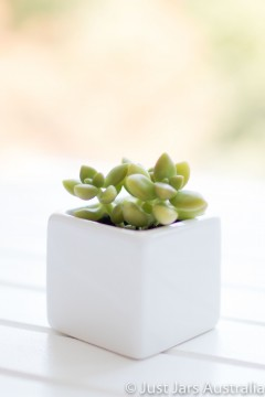 White planter pot (5cm cube)