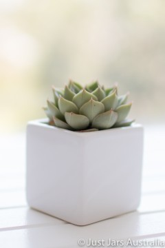 White planter pot (6cm cube)
