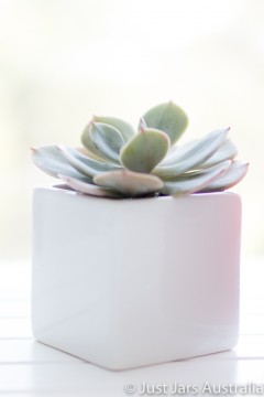White planter pot (7cm cube)