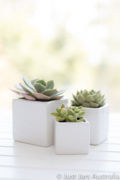 White mini planters - Sample pack
